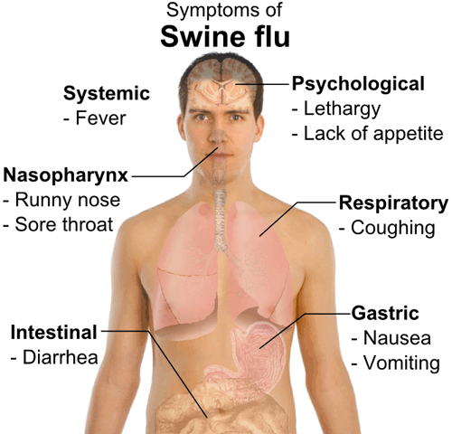 Symptoms of swine flu